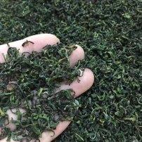 特级日照绿茶2021明前新茶散装浓香型高山茶叶500g礼盒装