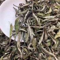 2021年福鼎白茶新茶高山白茶毫香花香白牡丹500g散茶茶叶