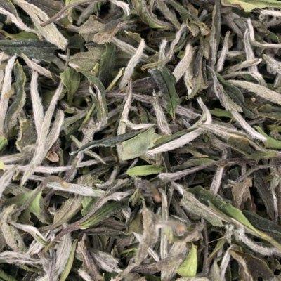2021年荒野牡丹王,存点新茶喝老茶性价比超高的一款野茶🍵
