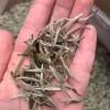 福鼎白茶2021新茶白毫银针散茶特级茶叶头采银针芽500g罐装