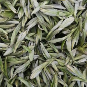 四川豆香龙井,高山茶园茶产地销售,2019年新茶龙井茶绿茶茶叶
