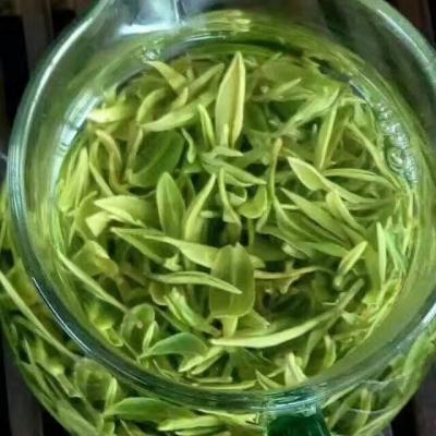 日照绿茶一级