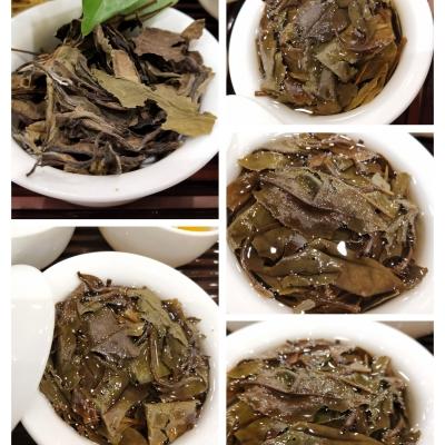 知青茶园老树白茶,11年老树茶