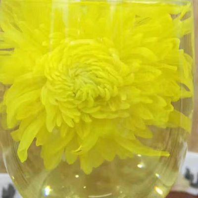 2019新花金丝皇菊头采皇菊,一朵一杯 长期饮用,清肝明目,降火凉茶。