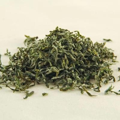 日照云雾绿茶