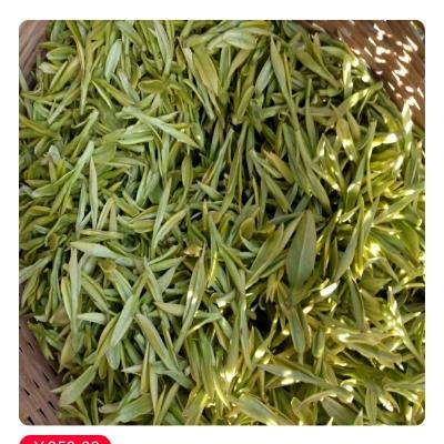 2020安吉白茶第二天茶