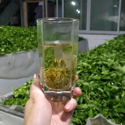 2020年新茶贵州凤岗锌硒有机绿茶浓香型500g