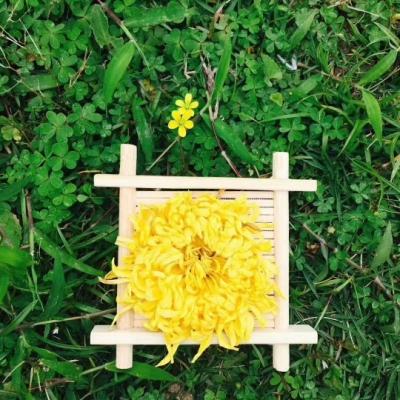 金丝皇菊一盒三十朵