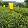 绿茶2020年新茶凤岗锌硒茶谷雨前粟香型香茶500g袋装