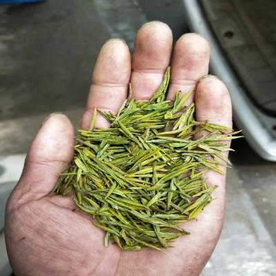 2020正宗安吉白茶,自产自销一手批发价
