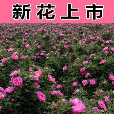 玫瑰花茶花草茶叶花茶组合干玫瑰花美容养颜补气血口臭茶50克罐装养颜茶