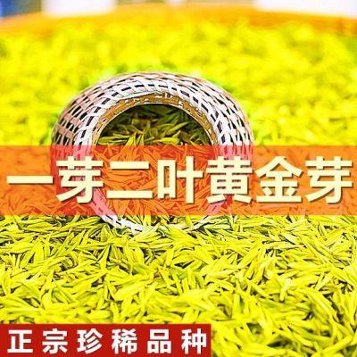 正宗特级黄金芽2020新茶安吉白茶春茶叶绿茶黄金茶叶散装浓香500g