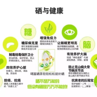 2020年新茶紫阳县焕古镇翠峰茶绿茶口粮茶500g