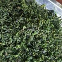 小叶苦丁茶,100g自产自销绝对的一手货源13684160664