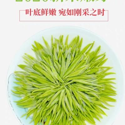苏州碧螺春2020新茶特级浓香型绿茶明前茶叶礼盒散装春茶250g
