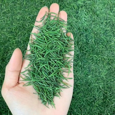 2020绿茶雀舌 明前头道新茶 小米芽