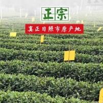 绿茶2020新绿茶山东一级日照绿高山云雾浓香散装袋装500g自产自销
