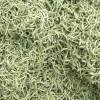 金银花茶无任何添加剂纯天然烘干2020年新绿色金银花茶,50克装!
