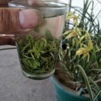 2020年新茶绿茶高山浓香耐泡茶叶罐装500g