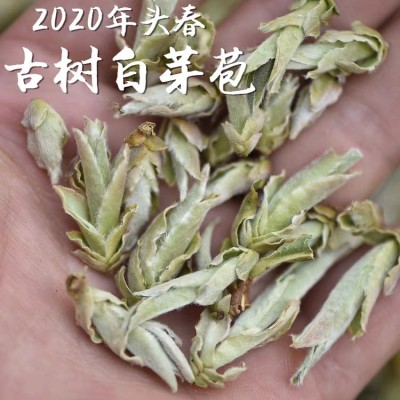 2020年春茶野生古树白芽孢茶白芽苞茶千年老妖普洱茶生茶散茶500g
